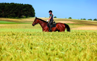 Horse and rider in field
