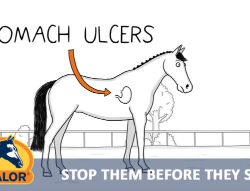 Stop ulcers before they start