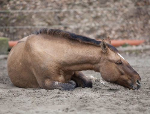 "This time of year is generally known as ""colic season"""