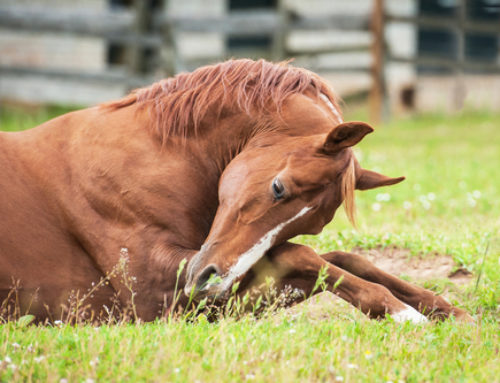 Colic: Preventing your worst nightmare