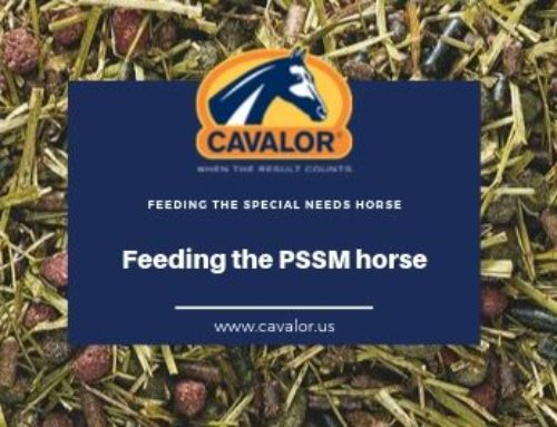 What is PSSM and how do you feed the PSSM horse?