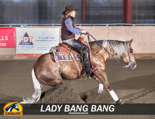 Friday Spotlight: Reining in the Week with a Bang!