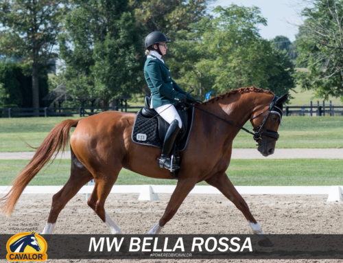 Horse Spotlight with a young FEI Dressage Star!
