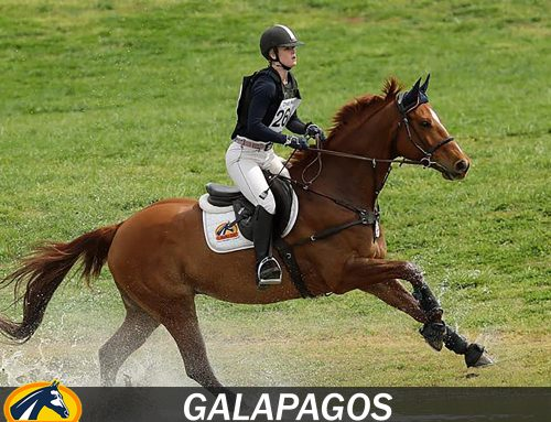 Cantering into the weekend with Galapagos