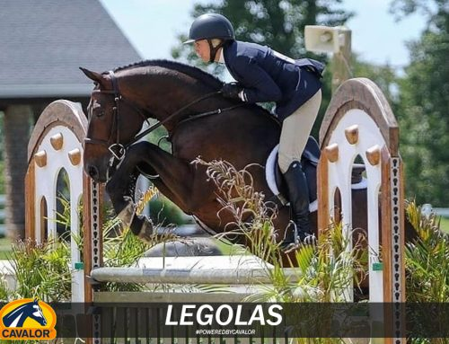 Friday Spotlight with the beautiful and regal Legolas! How Pianissimo calmed and improved this Derby Horse's performance!