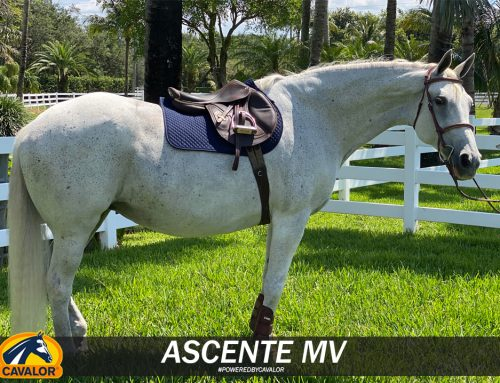 Headed into the Weekend with the Beautiful Ascente MV