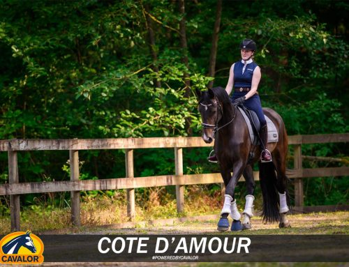 A Breeding Worth Waiting For: Spotlight on Cote D'Amour
