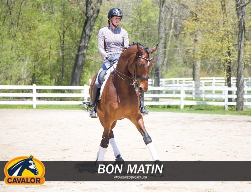 Feeding a Performance Horse is a Balance! Learn What Combination of Cavalor Feeds Keep This Dressage Star On Point!